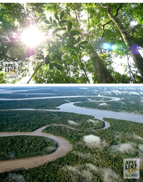 ecosystem services lowland tropical rainforests