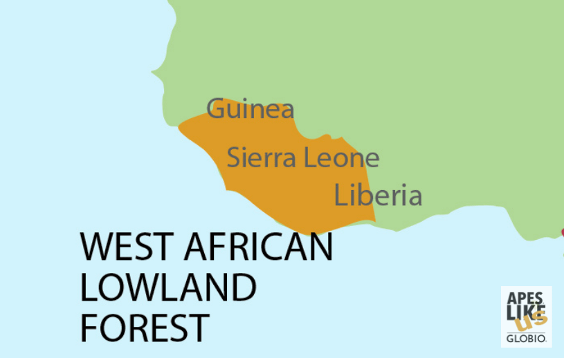 West African Lowland Forest Map - encompassing Guinea, Sierra Leone, and Liberia