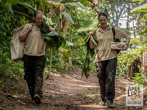 Two volunteers collect local forage for sanctuary primates