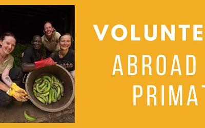 Volunteer Abroad With Primate Sanctuaries