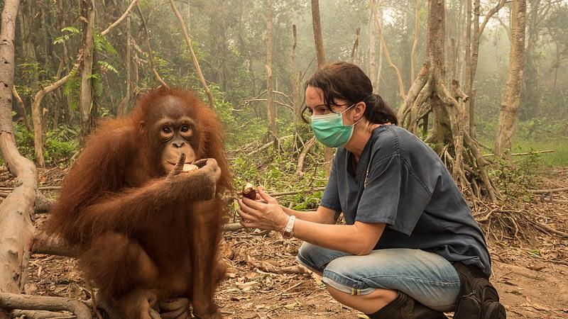 Karmele and chimp