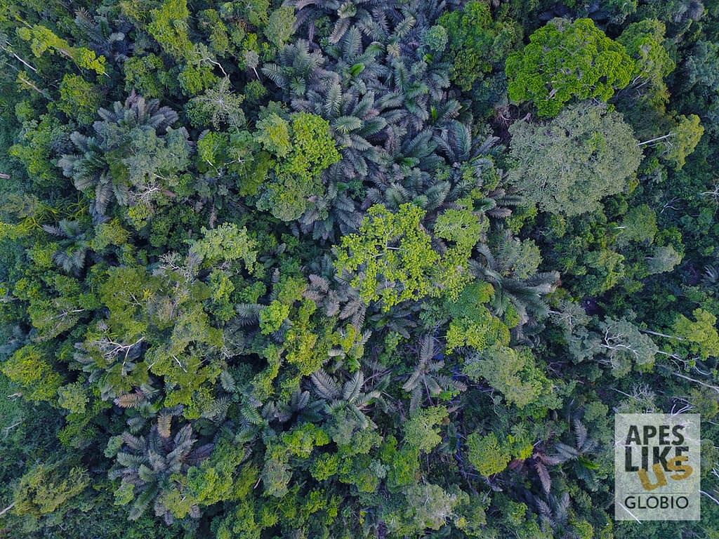 Cameroonian lowland rainforest canopy diversity