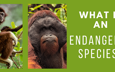 What is an Endangered Species?