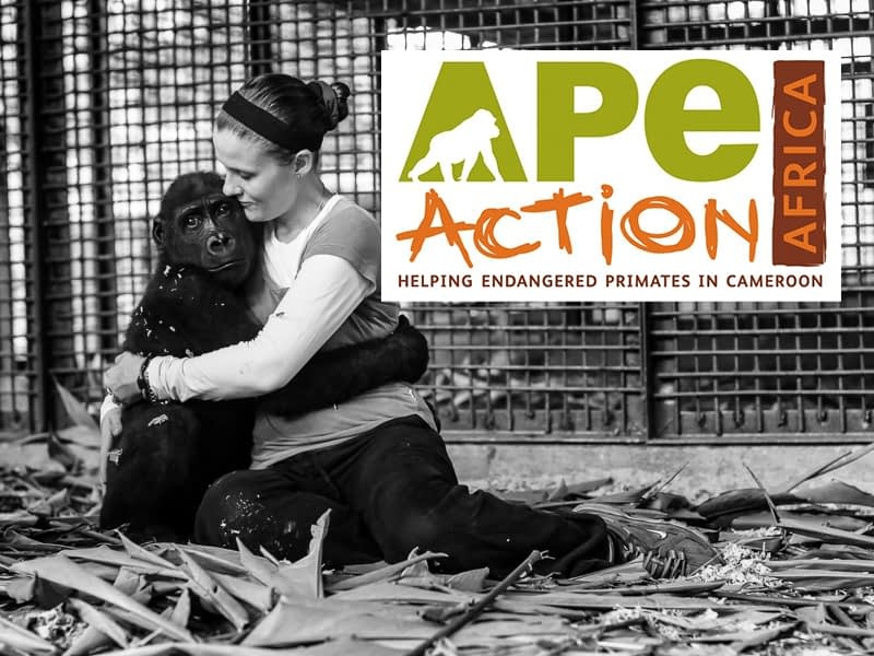 Ape Action Africa — Saving Primates in the Western Congo Basin