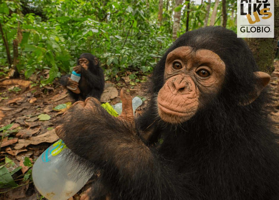 Baby Ape Forest Schools – Not your typical daycare