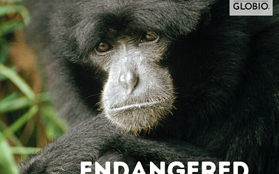 May Primates of the Month: Endangered Species