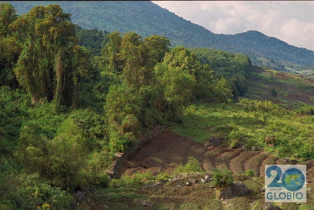 park boundary Virunga NP, Rwanda