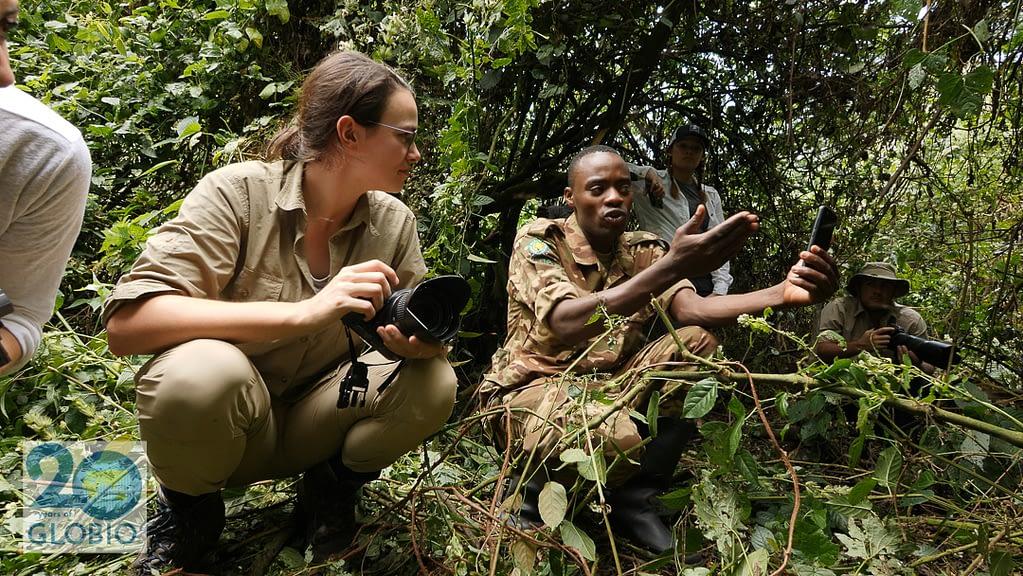 gorilla ecotourism Bwindi Impenetrable Forest Uganda