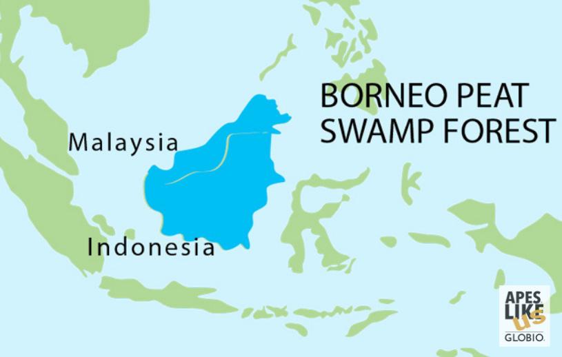 Bornean Peat Swamp Forest - Encompassing Island of Borneo