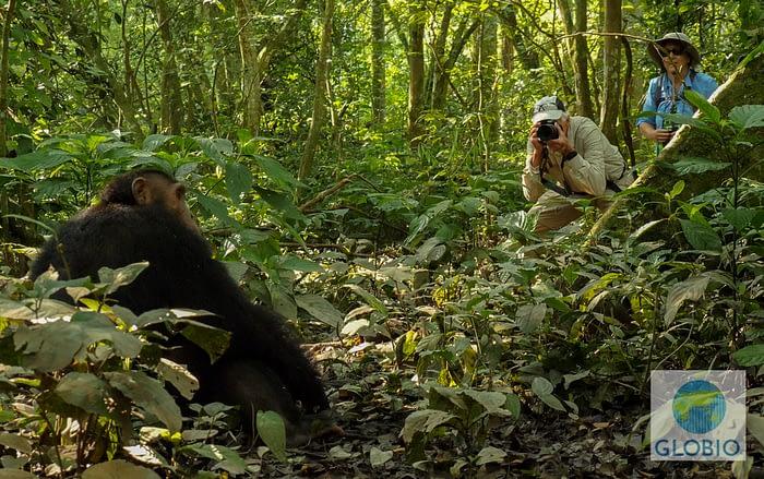 Chimp trekking Kyambura Gorge Uganda