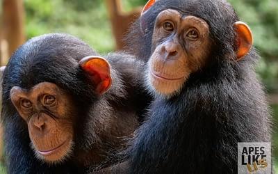 Tacugama Chimpanzee Sanctuary: GLOBIO's Newest Programs Partner