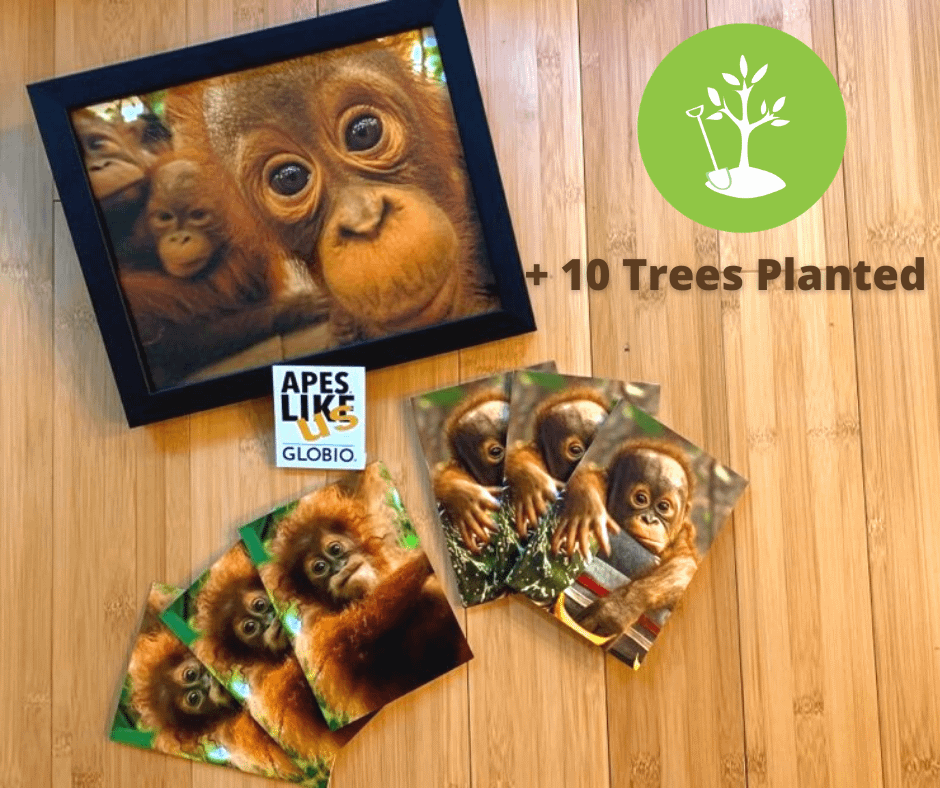 OTP Package: photo print, baby orangutan notecards, ALU sticker and 10 trees