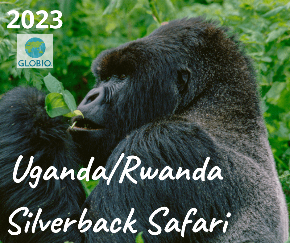 Uganda/Rwanda Great Apes safari