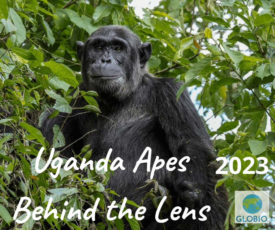 Uganda Great Apes Safari
