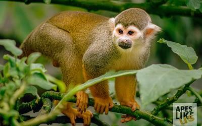 December Primates of the Month — Wonderful World of Monkeys