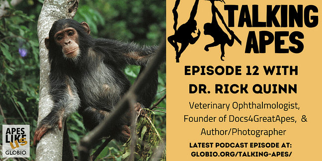 Talking Apes Episode 12 with Dr. Rick Quinn