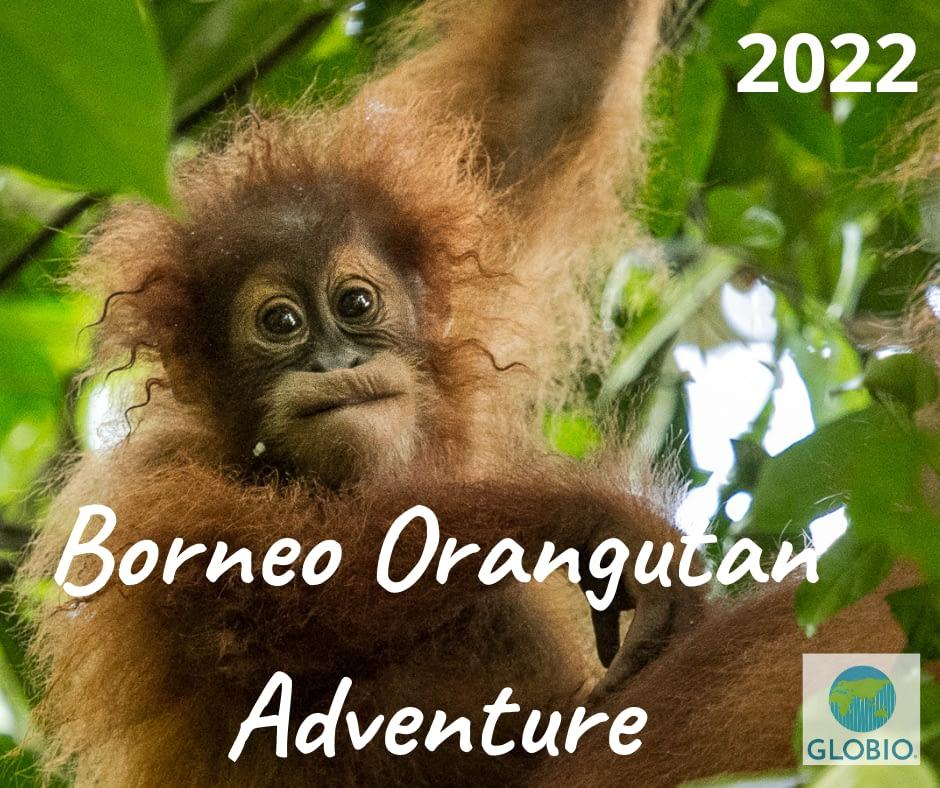 Borneo Orangutans Adventure