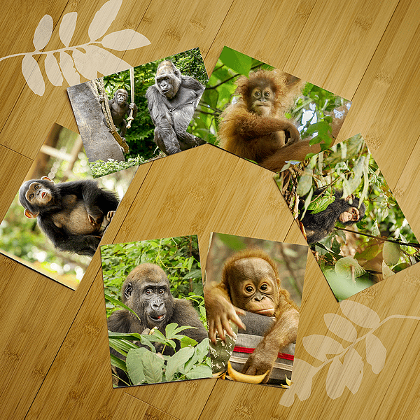 Great Ape Notecard Set