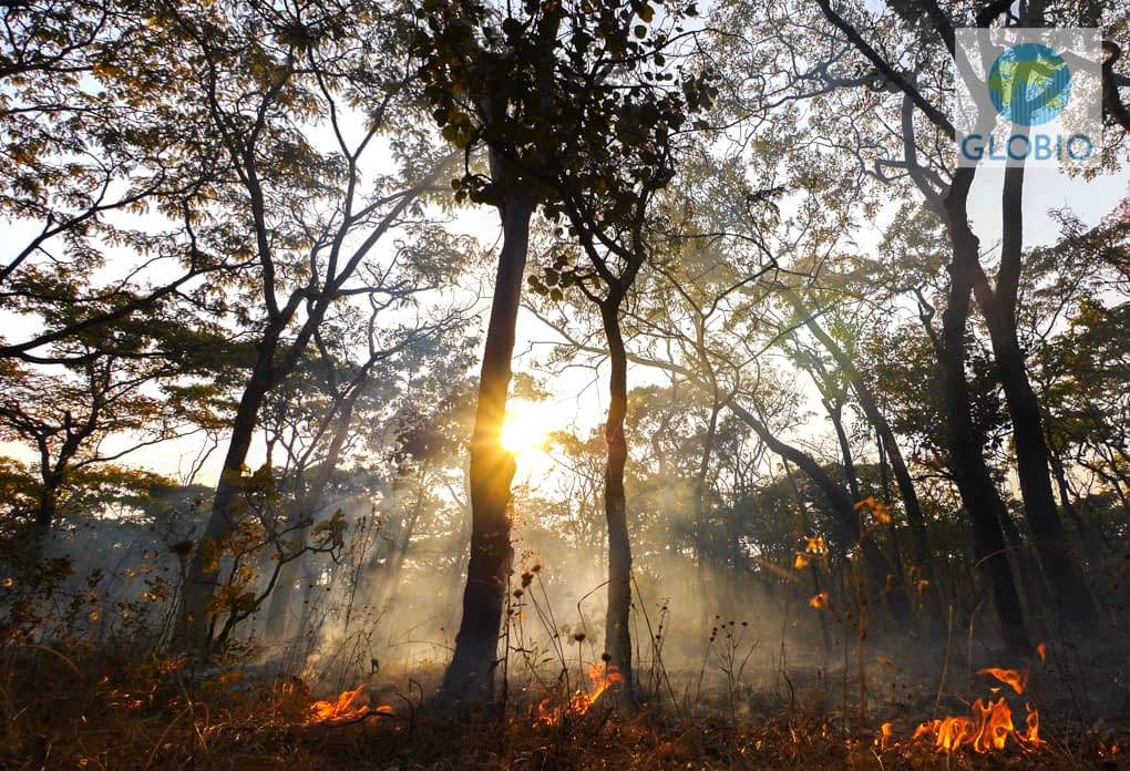 Extreme climate events driving bushfires