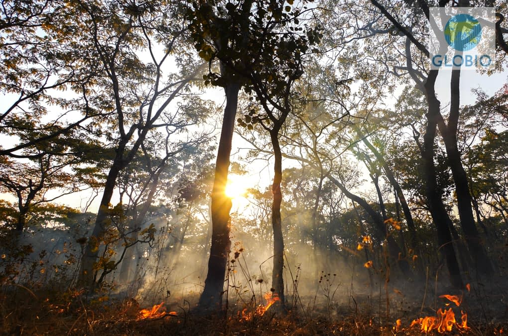 Backyard Burning: Australia and a Planet on Fire