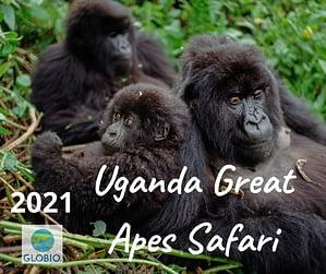 Uganda Great Apes Safari 2021