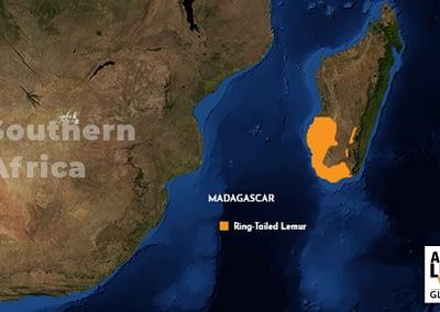 Ring-Tailed Lemur Map