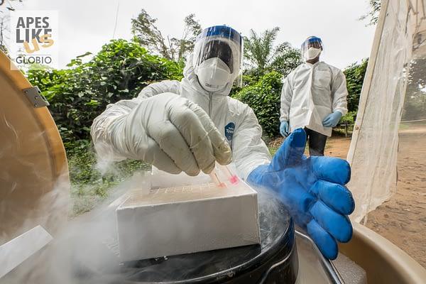 PPE suited virologist searching disease origin, Cameroon, West Africa
