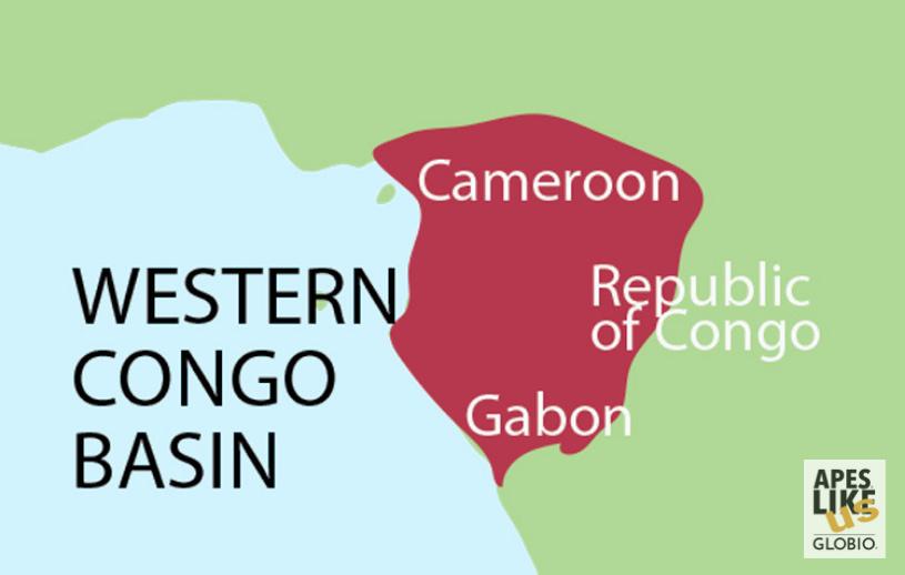 Western Congo Basin - Encompassing Cameroon, Republic of Congo, and Gabon