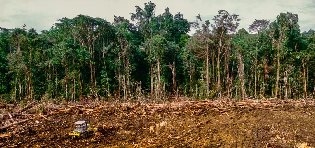 tropical forest deforestation