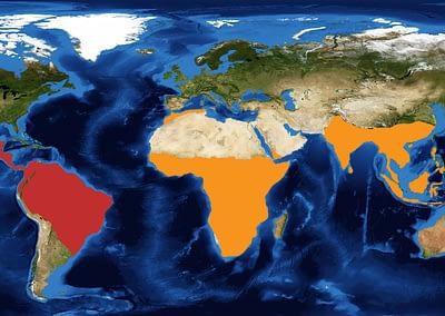 World Map - red indicating New World Primates, Orange indicating Old World Primates