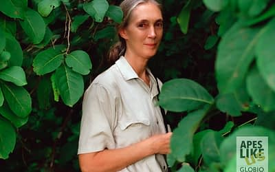 Jane Goodall – Happy Birthday!