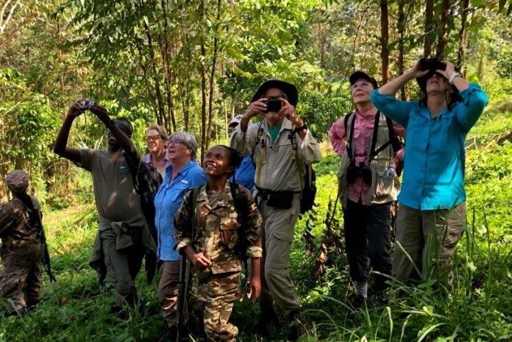Travel with GLOBIO- Guests use binoculars to spot wild Chimpanzees in Bwindi, Uganda